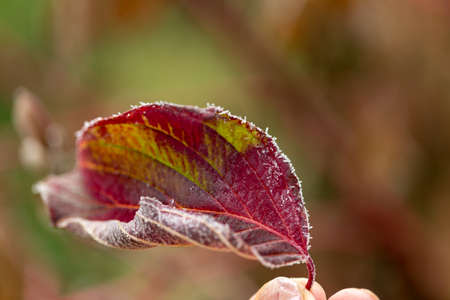 frozen dew skin with autumn leaves, natural and colorful