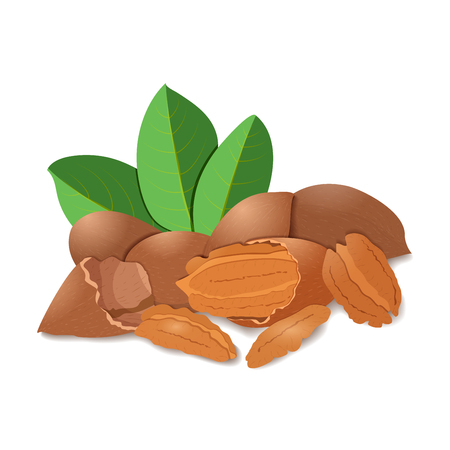 whole pecans: illustration of pecan nuts Illustration