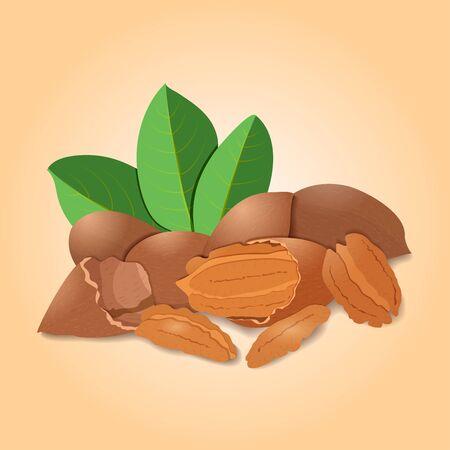 pecan: illustration of pecan nuts Illustration