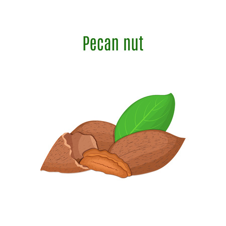 handful: Vector illustration of a pecan nut. A handful of Appetizing pecan nut with yellow flower, red and yellow nuts and leaves on a white background. Elements of packaging design brochures on healthy eating