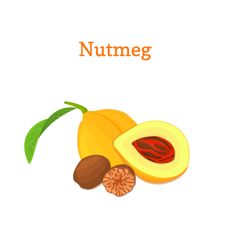 Nutmeg with leaves. Vector illustration of a handful of nutmeg spice nut isolated on white background it can be used as packaging design element, printing brochures on healthy and vegetarian diet