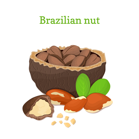 handful: Brazilian nuts. Vector illustration of a handful of nut peeled nuts and in shell, leaves isolated on white background it can be used as packaging design element, printing brochures on healthy, diet