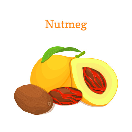 Nutmeg with leaves. Vector illustration of a handful of nutmeg spice nut isolated on white background it can be used as packaging design element, printing brochures on healthy and vegetarian diet Vetores