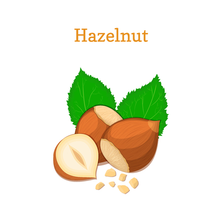 hazel nut: Hazelnuts with leaves. Vector illustration of a handful of hazel nut isolated on white background it can be used as packaging design element, printing brochures on healthy and vegetarian diet