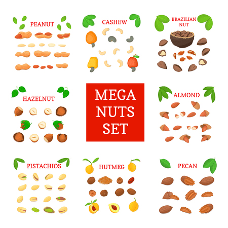 cashews: Mega nut vector set. Pecans, hazelnuts, peanuts, nutmeg, almonds, cashews, Brazil nuts, pistachio. Eight different types of nuts for the packaging design of brochures about nutrition