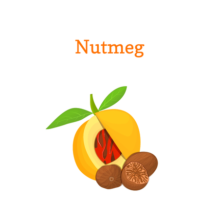 nutmeg: Nutmeg with leaves. Vector illustration of a handful of nutmeg spice nut isolated on white background it can be used as packaging design element, printing brochures on healthy and vegetarian diet