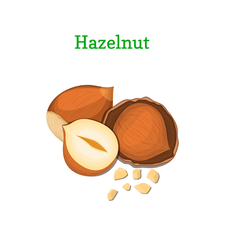 Hazelnuts vector illustration of a handful of walnut peeled nuts and in shell isolated on white background it can be used as packaging design element, printing brochures on healthy and vegetarian diet Illustration