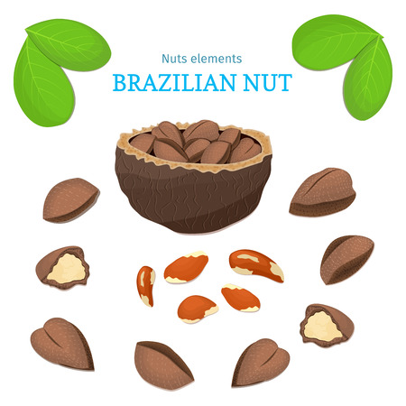 brazil nut: Vector set of nuts. Brazil nut fruit, whole, peeled, piece of half, walnut in shell, leaves. Collection of brazilian nuts designer elements for use in packaging design projects flyer healthy eating Illustration