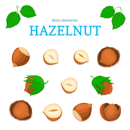Vector set of nuts. Hazelnut nut fruit, whole, peeled, piece of half, walnut in shell, leaves. Collection of walnut nuts designer elements for use in packaging design projects flyer healthy eating Illustration