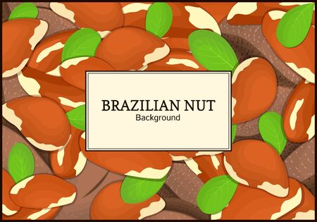 brazil nut: The rectangular frame on brazilianut background. Vector card illustration. Nuts frame, brazilnut fruit in the shell, whole, shelled, leaves, appetizing looking for packaging design of healthy food