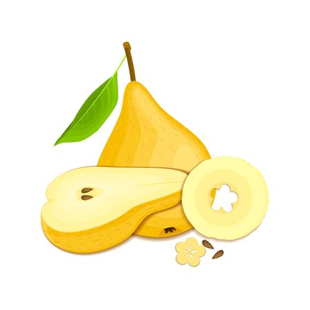 vegetarianism: Composition of several pears. Yellow vector pear fruits whole and slice appetizing looking. Group of tasty fruits colorful design for the packaging of juice, breakfast, healthy eating, vegetarianism
