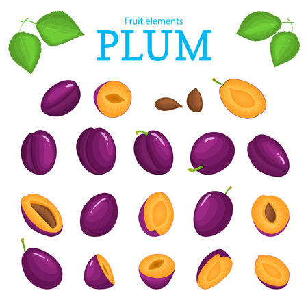 prune: Vector set of purple fruits. Plum fruit, whole, peeled, piece of half, slice leaves, seed. Collection of delicious red plums designer elements for use in packaging design projects flyer healthy eating