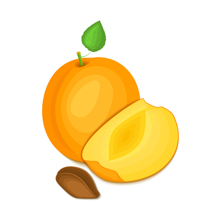 vegetarianism: Composition of several apricot. Ripe vector apricot fruits whole and slice appetizing looking. Group of tasty fruits colorful design for the packaging of juice breakfast, healthy eating, vegetarianism