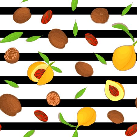 Vector seamless pattern Nutmeg spice fruit. Striped background with Nutmeg nuts fruit in the shell, whole, shelled, leaves appetizing looking for design of healthy food, printing on fabric, textile Ilustração