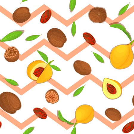 Vector seamless pattern Nutmeg spice fruit. Striped zig-zag background with Nutmeg nuts fruit in the shell, whole, shelled, leaves appetizing looking for design of healthy food, printing on fabric Ilustração