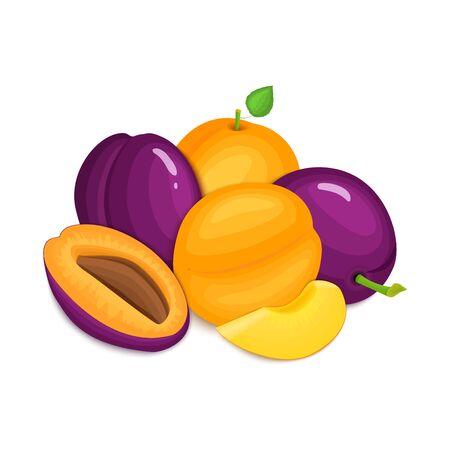 Composición de las ciruelas y albaricoques jugosos. Albaricoque maduro y ciruela vector de frutas enteras y apetitosa rebanada buscando. Grupo de frutas sabrosas para el diseño de los envases de jugo, desayuno saludable alimentación vegetariana