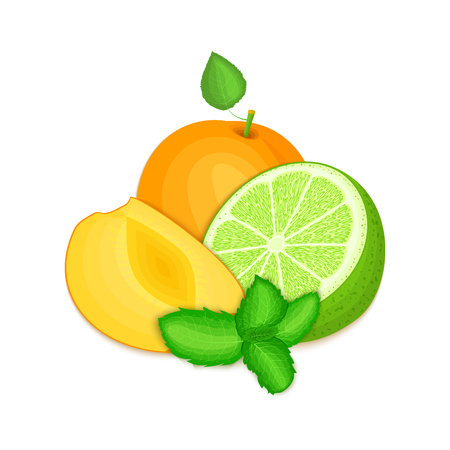 mint leaf: Composition of several apricot citrus lime fruit and mint leaves. Ripe vector apricots limes fruits with fresh pepper mint leaf. Group of tasty fruits for design packaging juice cocktail healthy food