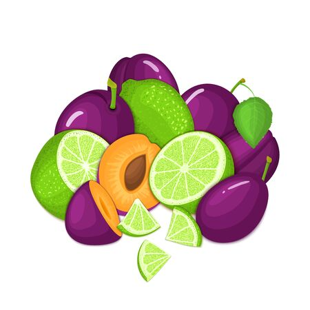 prune: Composition of several plum and citrus lime fruit. Ripe vector plums and tropical limes fruits. Group of tasty fruits whole and slice for design packaging juice, cocktail, healthy food, vegan eat. Illustration