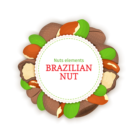 brazil nut: Round banner composed of brazil nut. Illustration