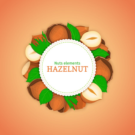 closely: Round white frame composed of hazel nut. Vector card illustration of filbert nut. Circle nuts frame, walnut fruit in the shell, whole, shelled, leaves for packaging design food. Illustration