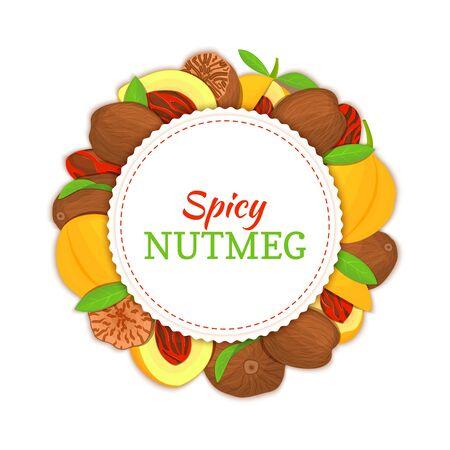 Round white frame composed of Nutmeg spice fruit. Vector card illustration.