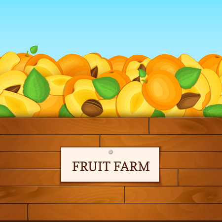 wood crate: Wooden box with apricot fruits. Vector card illustration. Illustration
