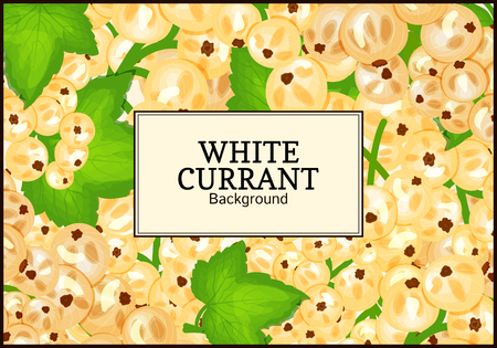 closely: Rectangle label on ripe white currant background. Vector card illustration. White berry fresh and juicy currant for packaging design food, juice, jam, ice cream, smoothies, detox, cosmetics cream, tea
