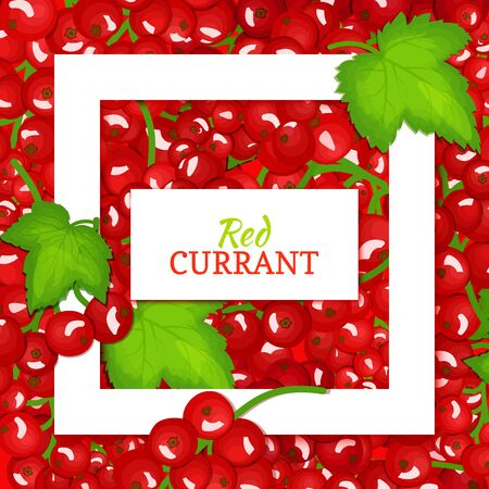 red currant: Square white frame and rectangle label on red berry background. Vector card illustration. Red currant fruit and leaves for packaging design food, juice, jam, ice cream, smoothies, detox, cosmetics, tea.