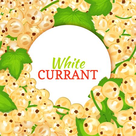 Round white label on ripe white currant background. Vector card illustration. White berry fresh and juicy currant frame for packaging design food, juice, jam, ice cream, smoothies, detox, cosmetics cream