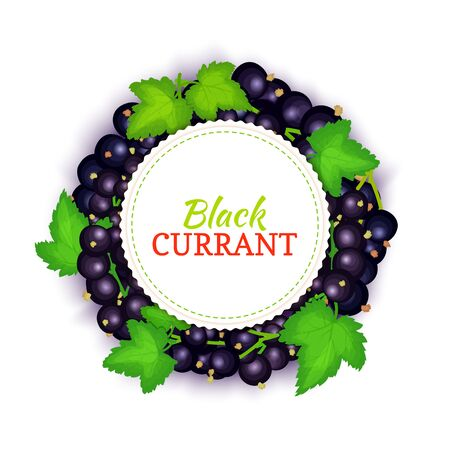 Round colored frame composed of black currant. Vector card illustration. Fruit label. Circle currant berries label fruit and leaves for packaging design of food, detox, cosmetics cream, jam, juice