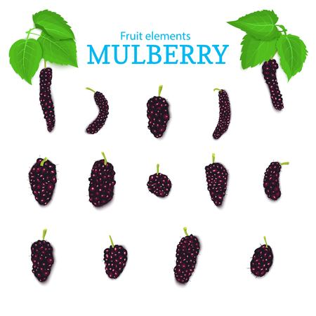 Vector set of a fresh red mulberry. Fresh dark Berries and leaves. Collection of ripe mulberry fruits elements for packaging design of juice, breakfast, jam, ice cream, smoothies, cosmetics.