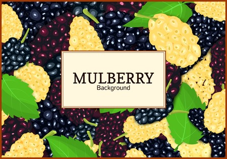 Rectangular label on ripe mulberry berry and leaves background. Vector card illustration. Mulberry beries fresh and juicy frame for design of food packaging juice breakfast tea detox diet.