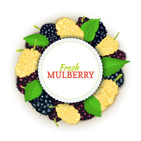 Round colored frame composed of delicious mulberry fruit, Vector card illustration. Mulberry berries fresh and juicy Circle frame for design of food packaging juice breakfast cosmetics tea detox diet.