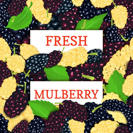 Two white rectangle label on mulberry berries background. Vector card illustration. Fresh and juicy mulberry fruits for design of food packaging juice breakfast detox diet, jam Çizim