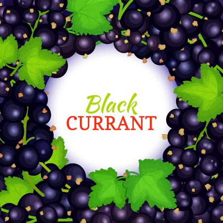 Round white label on ripe black currant, Black berry fresh juicy currant frame for packaging design food, juice, jam, ice cream, smoothies, detox, cosmetics cream.