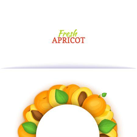 Cadre de couleur demi-cercle composé de délicieux fruits abricot. Illustration de carte vectorielle. Demi-rond d'abricots frais cadre blanc pour la conception de jus d'emballage alimentaire, petit-déjeuner, thé de cosmétiques, detox, régime Banque d'images - 93071042