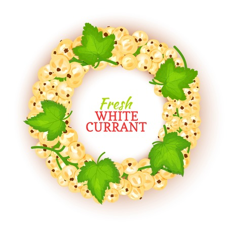 Circular white currant berries with fruit and leaves for packaging design of healthy food, detox, cosmetics cream, jam, juice