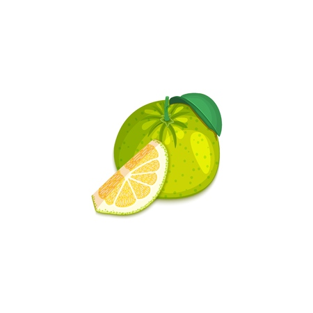 Composition of tropical grapefruit fruits. Vector card illustration. Group of ripe vector citrus pomelo fruit whole and slice for design of food packaging breakfast, detox, cosmetics cream, jam, juice