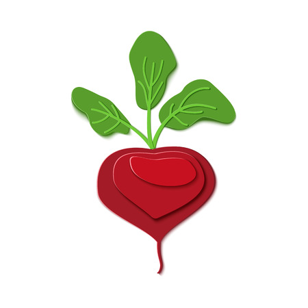 Paper cut red beet whith chard. Vector paper craft design in the form of ripe whole beetroot with leaves. Vector illustration. Paper applique art style root vegetable. Origami concept.