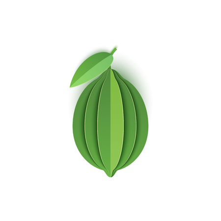 The paper is sliced with whole lime citrus, an excellent design for any purpose. Summer, sweet green lemon juicy food. Vector card 3d illustration. Tropical papercraft cut layers fruit.