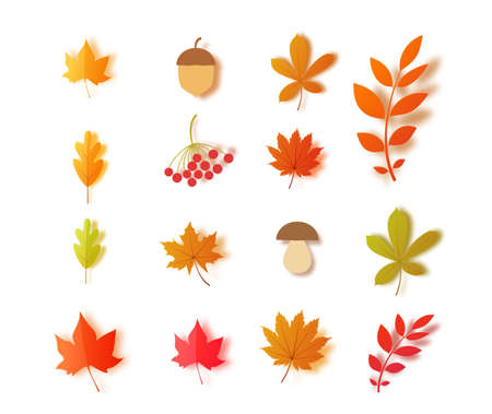 Set of autumn leaves mushroom acorn berries in paper cut style. Vector 3d collection forest plants oak maple chestnut leaf. Papercut craft elements for Thanksgiving day poster design