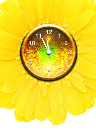 flower clock with yellow gerber Stock Photo - 6914930
