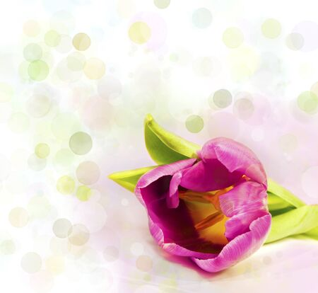 pink tulip over colorful light background photo