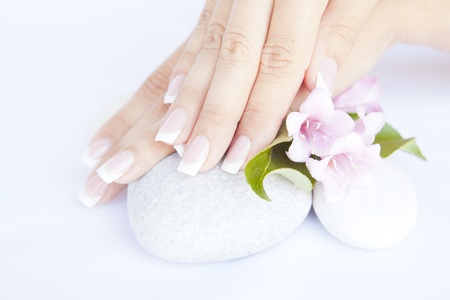 woman hands with beautiful french manicure nails and flower Фото со стока