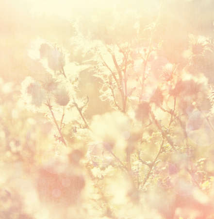 vintage background with nature elements photo