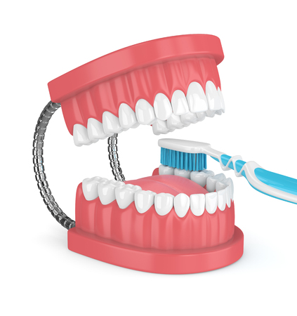 3d render of jaw model with toothbrush over white background Stock Photo