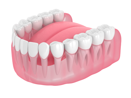 3d render of lower jaw isolated over white background