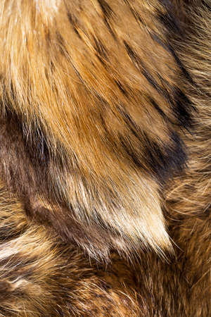 fox fur: Background of beautiful fox fur
