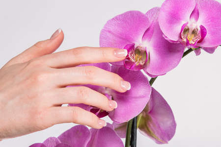 Hand with french manicure and orchid flower photo