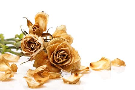 dode bladeren: Droog nam bloem op witte achtergrond